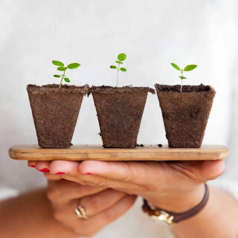 hand holding 3 seedlings on a platter